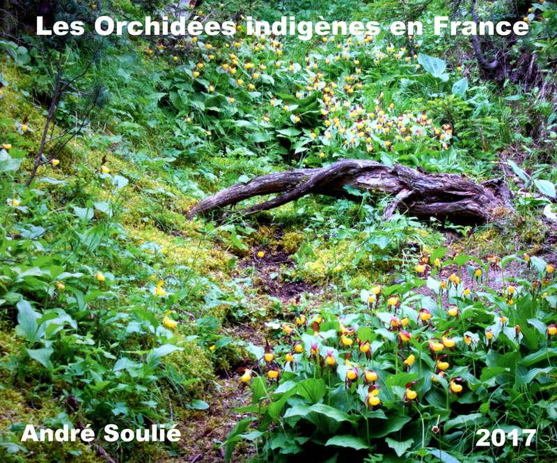 LES ORCHIDEES INDIGENES EN FRANCE SOULIE 2017 Dsc_0610