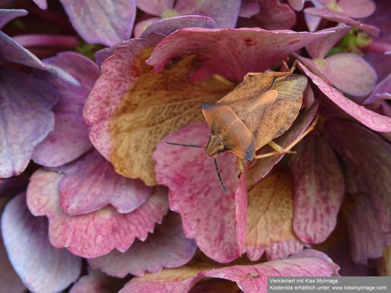 Schädlinge in Haus und Garten - in und auf den Grünpflanzen - Seite 5 Dsc02413