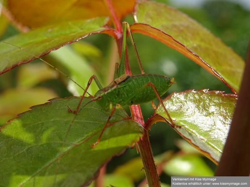 Schädlinge in Haus und Garten - in und auf den Grünpflanzen - Seite 5 Dsc02415