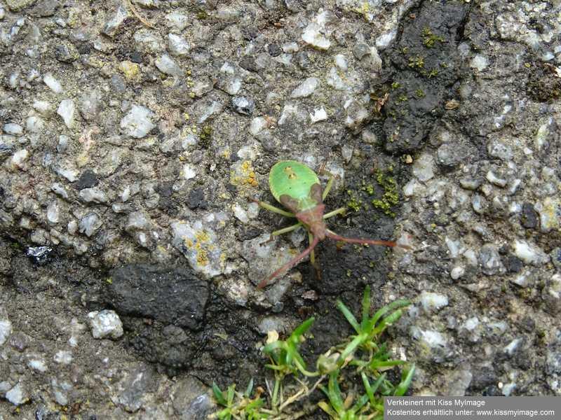 Schädlinge in Haus und Garten - in und auf den Grünpflanzen - Seite 5 Dsc02417