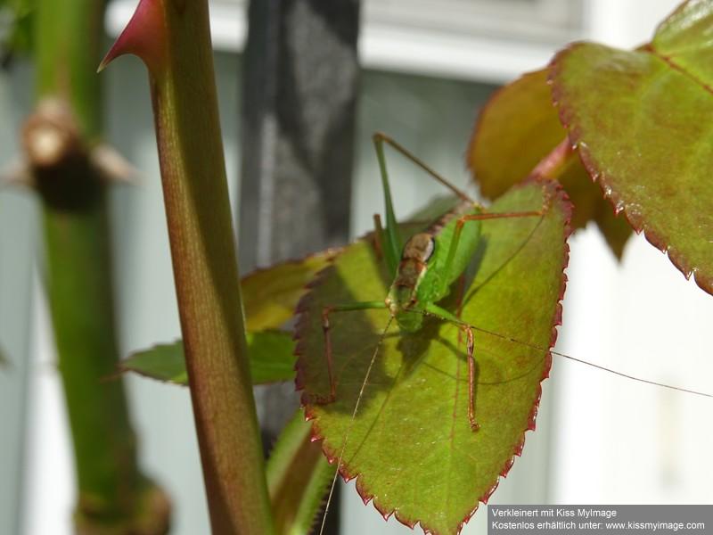 Schädlinge in Haus und Garten - in und auf den Grünpflanzen - Seite 5 Dsc02418