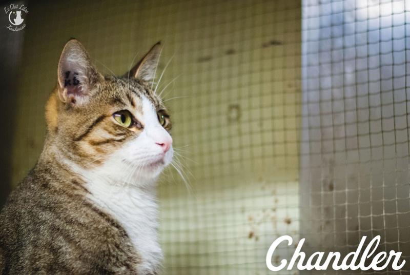 CHANDLER Chandl14