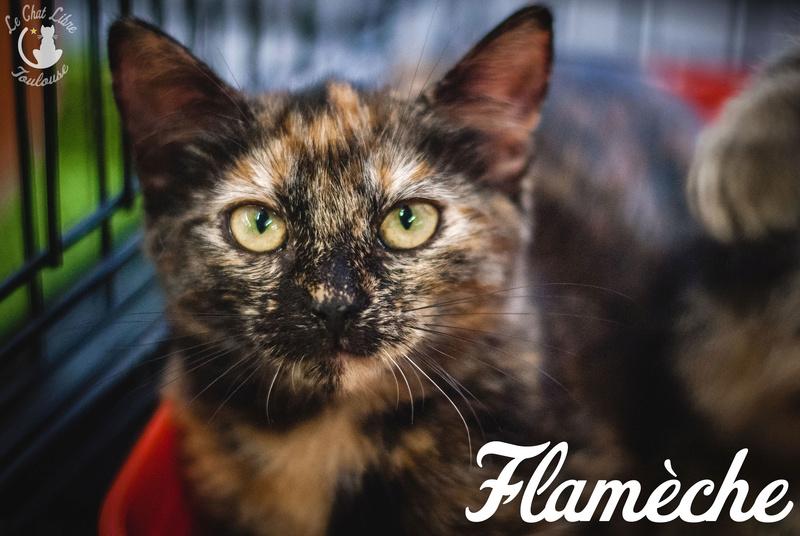FLAMECHE et CAPUCIN 4 Adoptés (CAOL ILA décédé) Flamec13