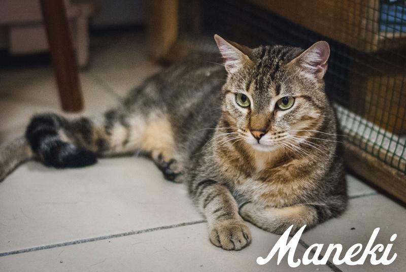 MANEKI  Maneki12