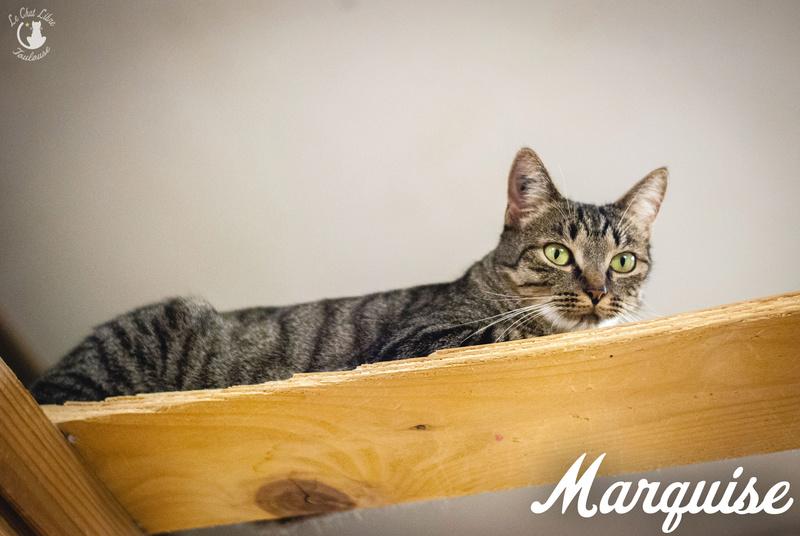 marquise - MARQUISE et CHIPIE 7 Marqui16