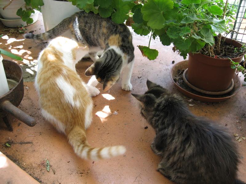 Mélisse, Cayenne et Sésame en FA Img_3728