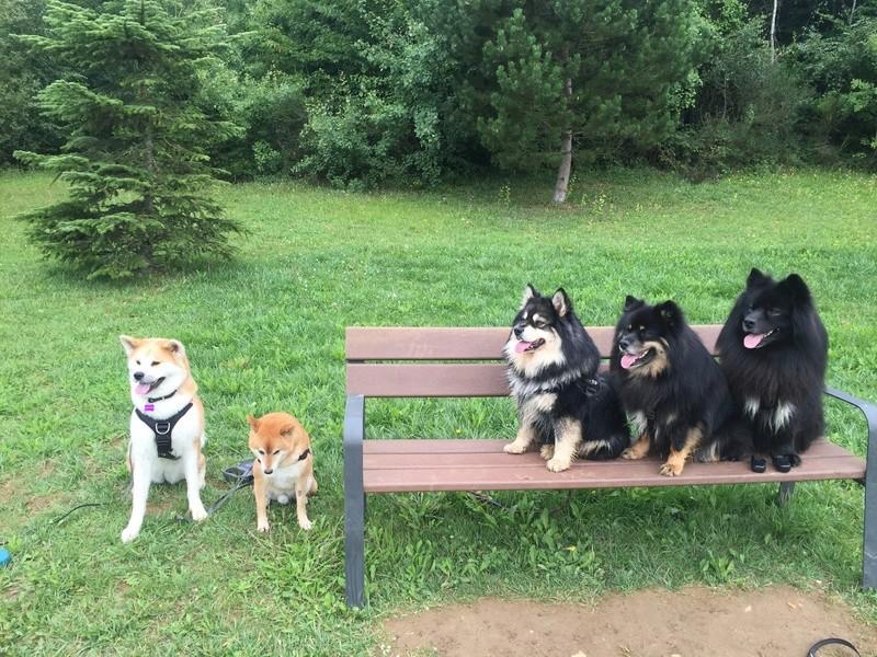 Balade de chiens à Gandrange Image14