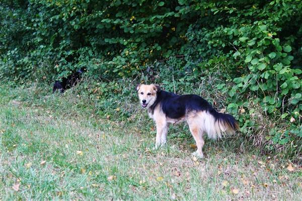 JENNY, femelle née env 2006 taille moyenne (Piatra Neamt) - REMEMBER ME LAND- en FALD par Lolita (55) DÉCÉDÉE - Page 3 Img_4110