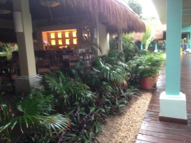 C'est très beau Cancun Riviera Maya Img_1230