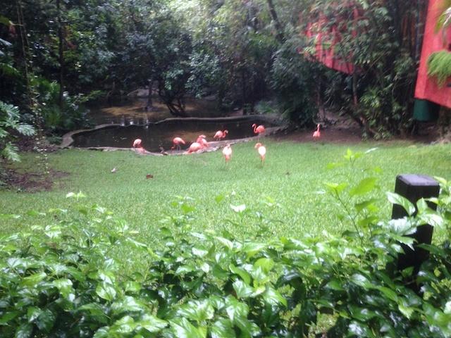 C'est très beau Cancun Riviera Maya Img_1232