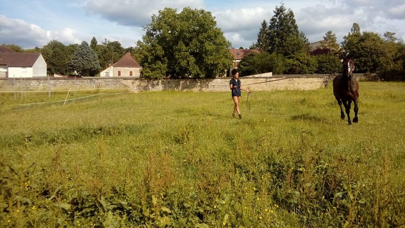 Dp 21 - 16 ans - Mystik du Bourg, hongre SF, adopté par Barbara (2017) Mystik10