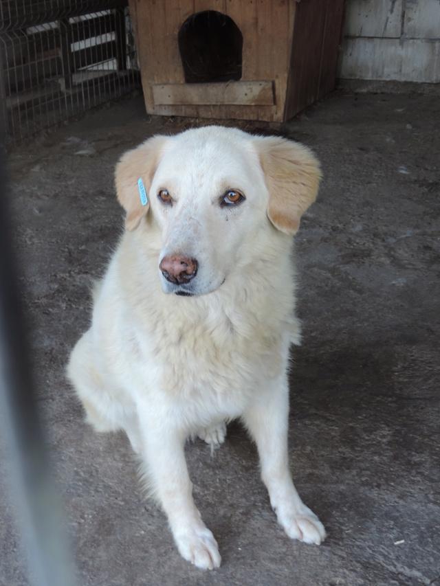 BALANUCH, mâle croisé berger sauvé de Pallady, né en 2009 parrainé par Nathalie Gamblin-SC-R-SOS- - Page 2 Balanu12