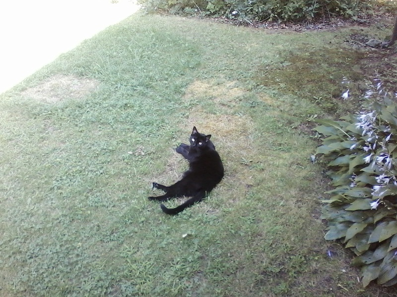 """R.I.P. """"Charlie"""" our kitty 08211610"""