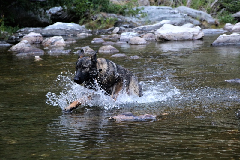 Ico, berger allemand et Misca, leonberg. - Page 8 Img_2017