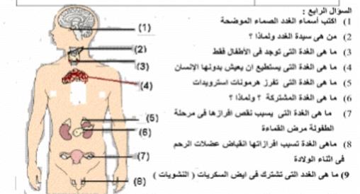 شرح التنسيق الهرموني في الكائنات الحية.. أحياء الصف الثالث الثانوي 2019 195