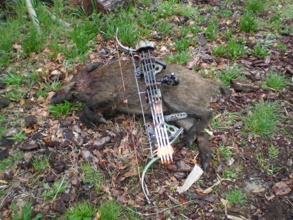 Quelques photos de mes chasses  P3281310