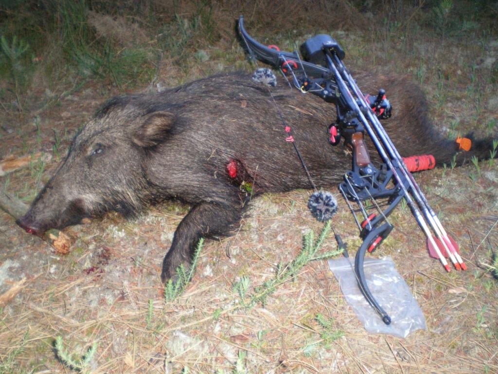 Quelques photos de mes chasses  P6070310