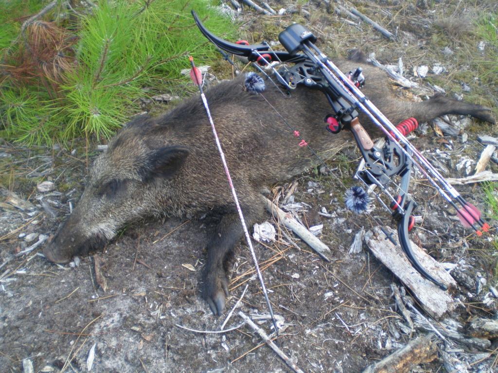 Quelques photos de mes chasses  P7191210