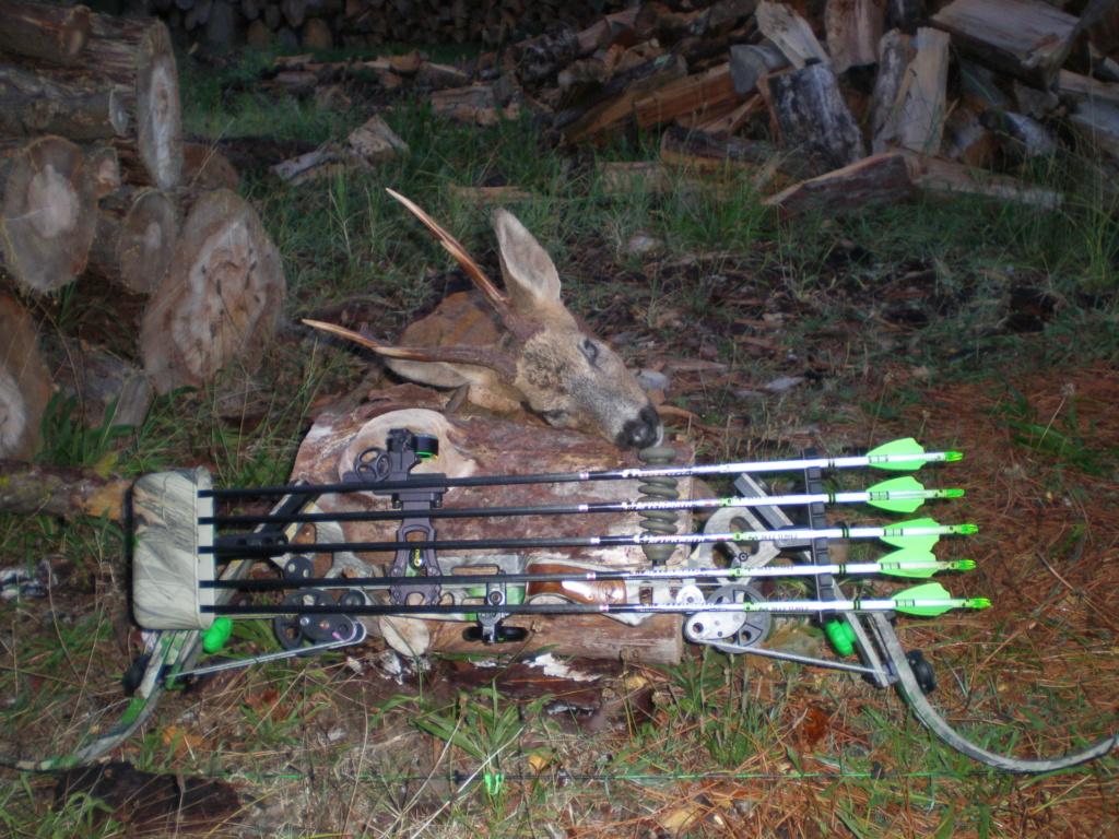 Quelques photos de mes chasses  P9161210