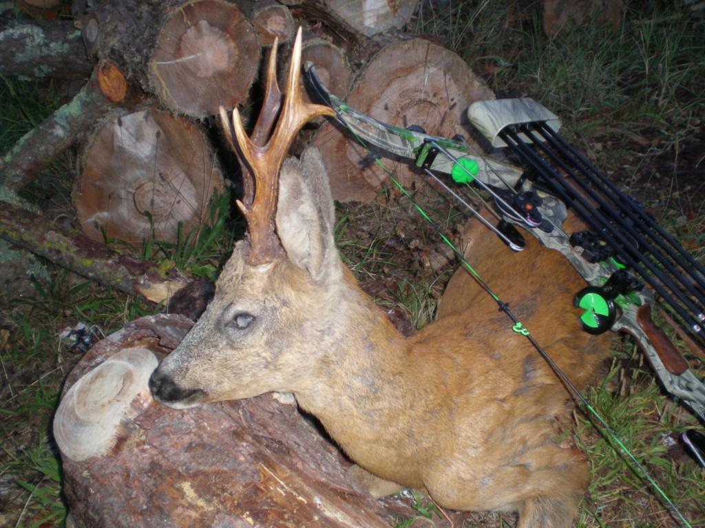Quelques photos de mes chasses  P9161211