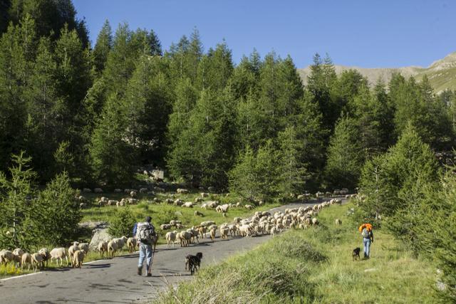 """Sur la route des """"Grandes Alpes"""" en Zoe Q210 - Page 2 Img_9011"""