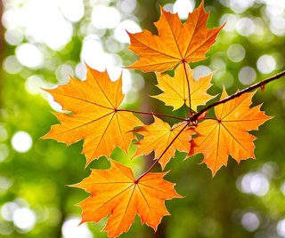 Photos d'automne - Page 2 20246510