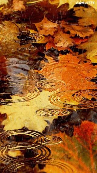 Photos d'automne - Page 2 94332110