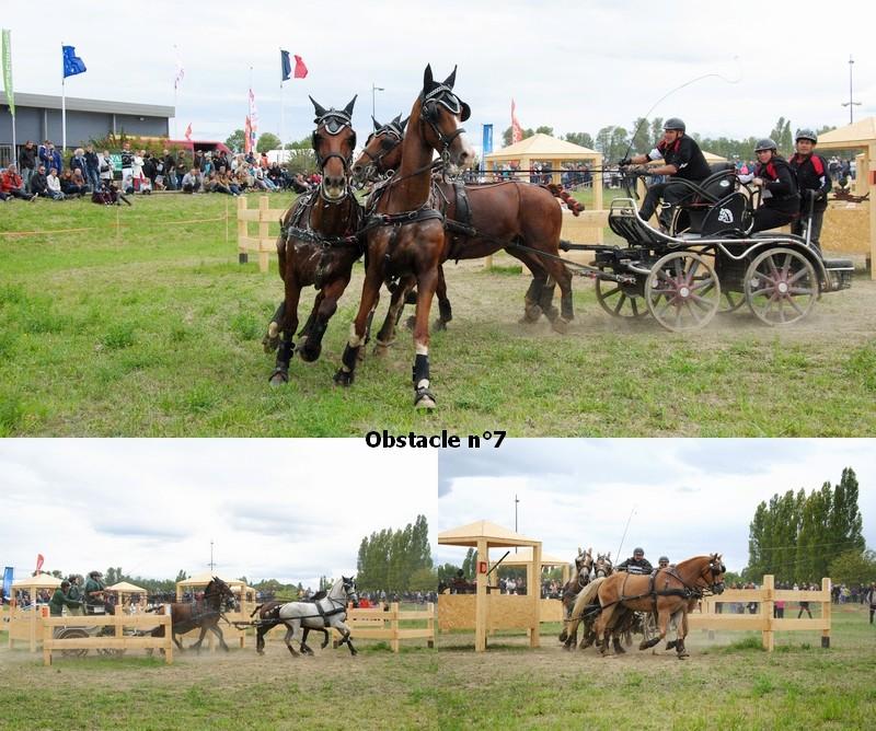 Concours Inter-régional d'attelage - Drôme - 2017 20170918