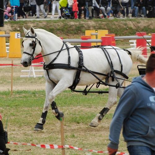 Concours Inter-régional d'attelage - Drôme - 2017 20170922