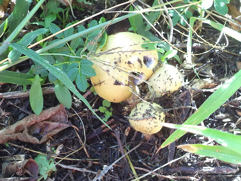 couverture(s) et champignon(s) Dsc02154