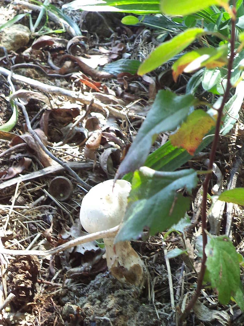 couverture(s) et champignon(s) Dsc02157