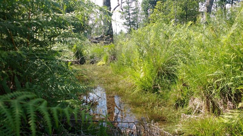 Le plaisir des Drosera sauvages (presque) dans son jardin ! Img_2025