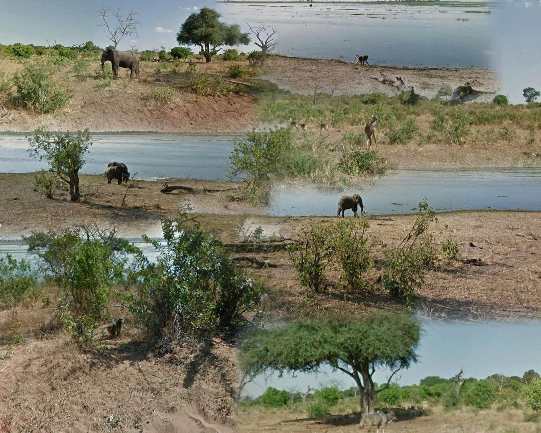 Safari virtuel Street View au Botswana  Safari10