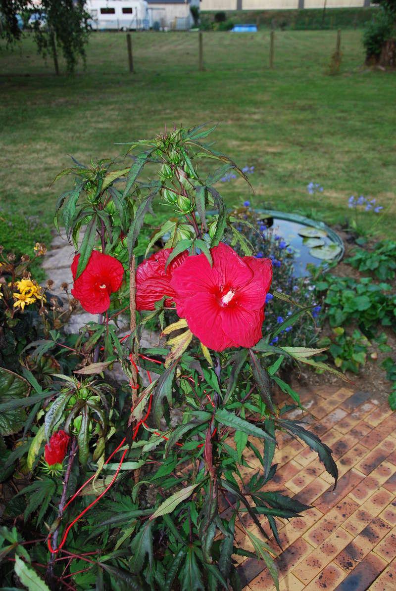 encore des beaux jours au jardin  Dsc_1616