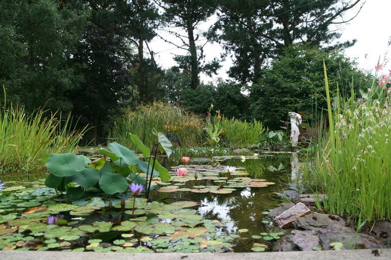 nagol - Jardin d'aquatiques Img_9210