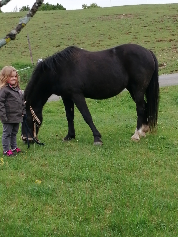 HAVANE - OI poney  née en 1995 - adoptée en mars 2014 par dona carlota - Page 3 Lzoa_e10