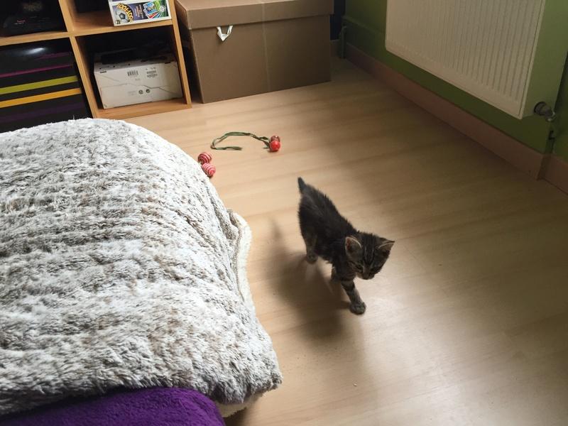 Nina, chatonne tigrée intrépide née le 10 mai 2017 Img_2320