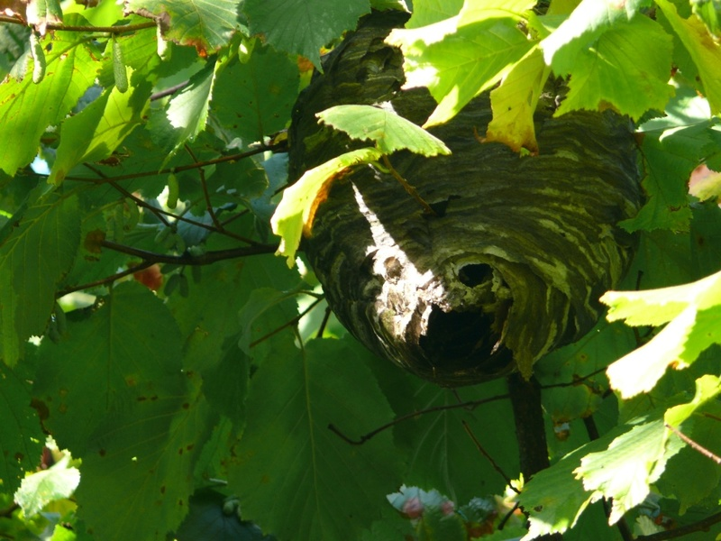 Un nid dans mon jardin Nid_sv10
