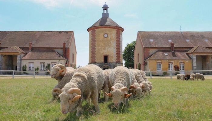 La Bergerie royale de Rambouillet Laiter10