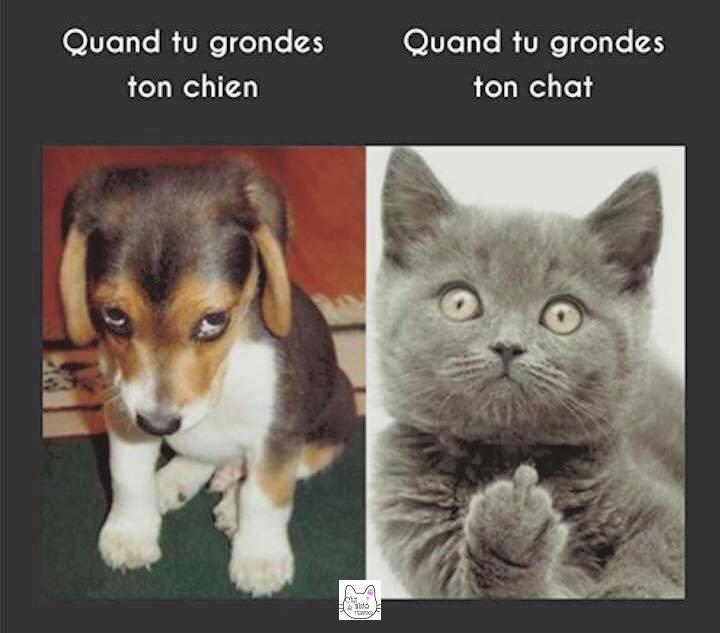 Images du jour sur les chats - Page 23 20620710