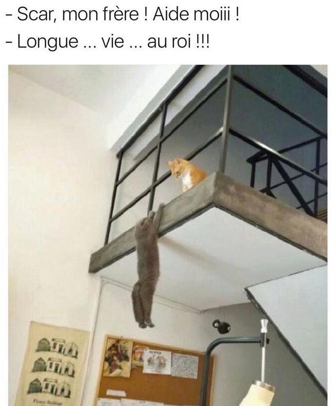 Images du jour sur les chats - Page 23 20767710