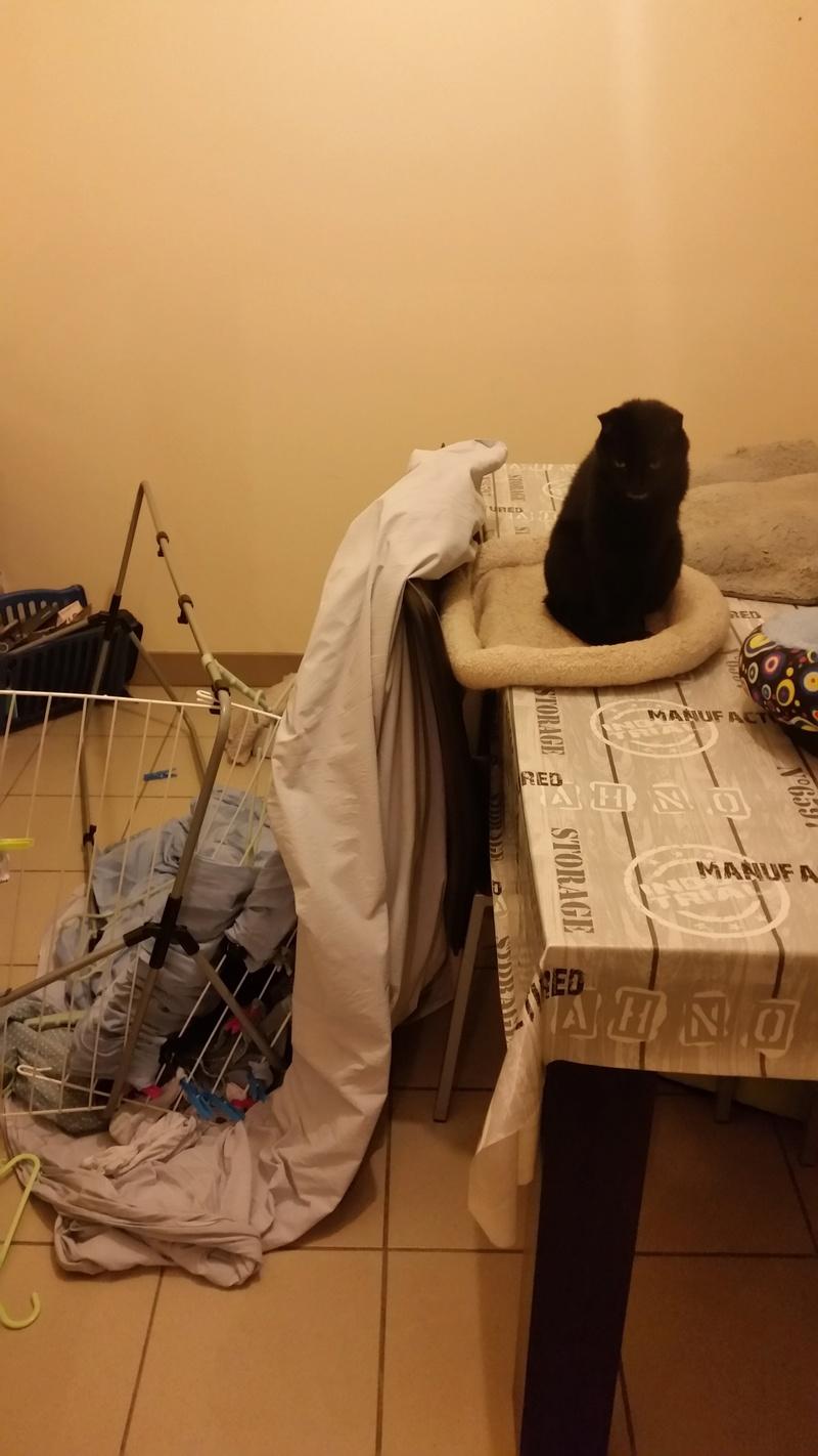 Quelle est la pire bêtise faite par vos chats ? - Page 5 Betise11