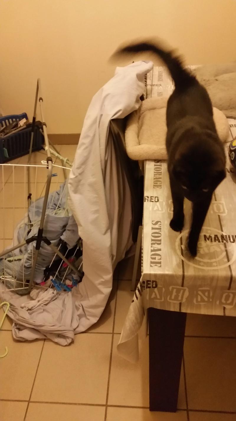 Quelle est la pire bêtise faite par vos chats ? - Page 5 Betise12