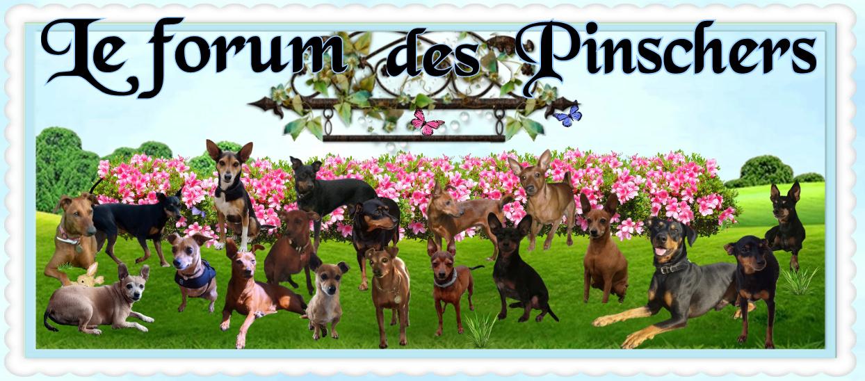 Le forum des Pinschers