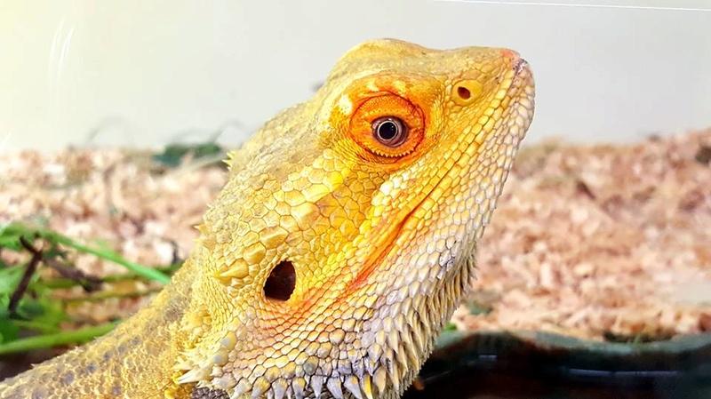 Photos de reptiles de la ferme tropicale 21462310