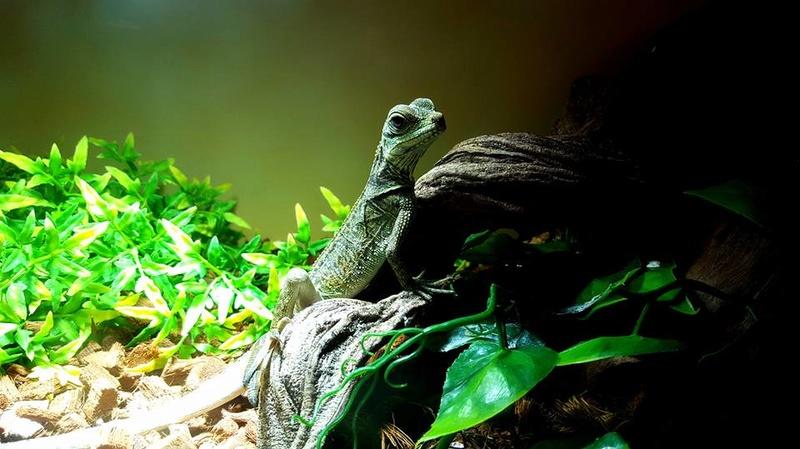 Photos de reptiles de la ferme tropicale 21462710