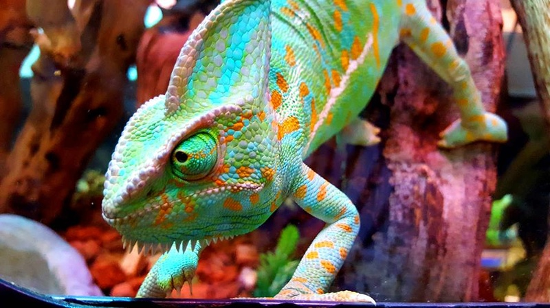 Photos de reptiles de la ferme tropicale 21462810