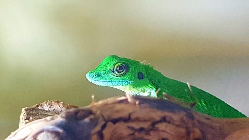 Photos de reptiles de la ferme tropicale 21557711