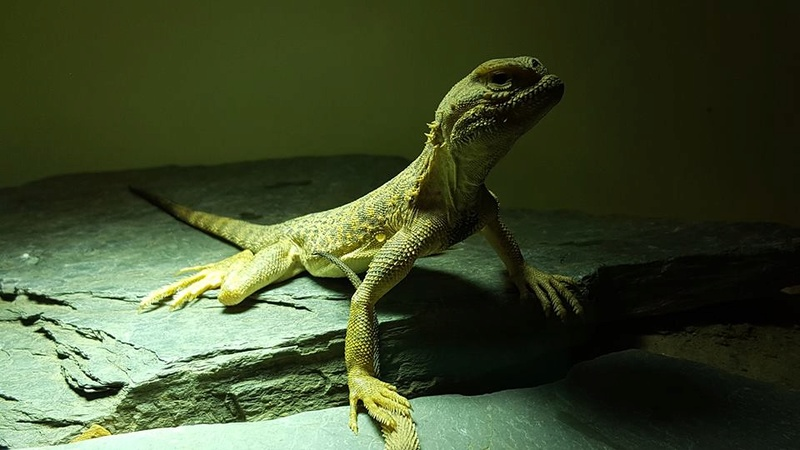 Photos de reptiles de la ferme tropicale 21557712