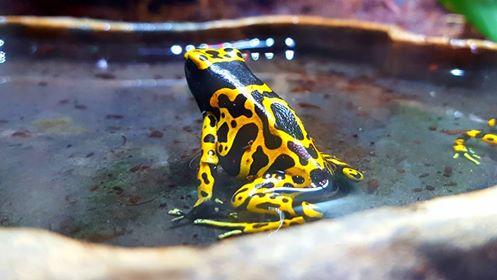 Photos de reptiles de la ferme tropicale 21616510